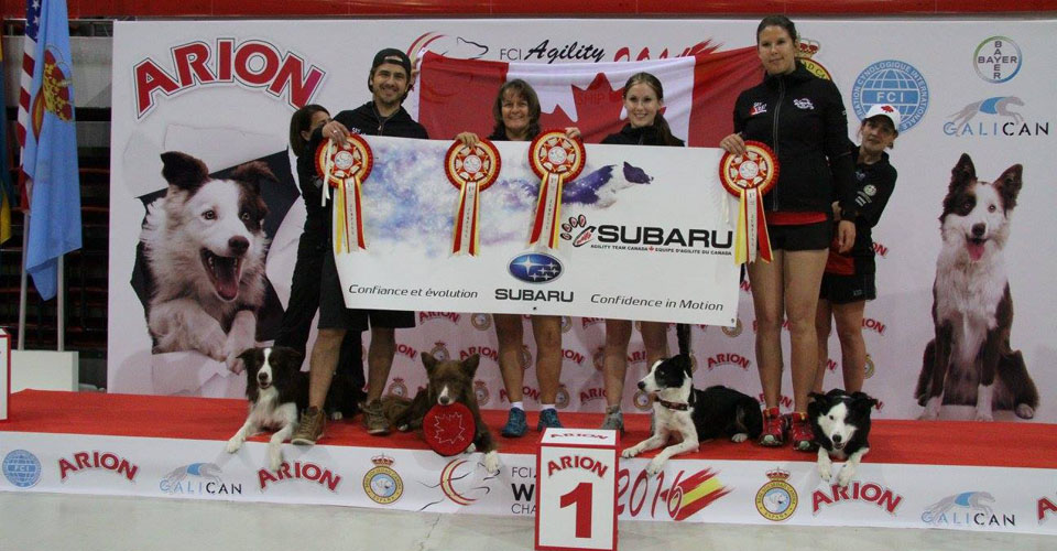 2016 AWC Subaru Agility Team Canada Large Dogs GOLD Team Jumpers